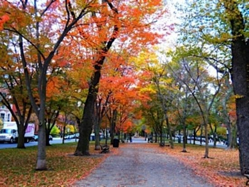 fall foliage in Boston!!